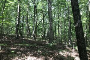 Liberty 29-Acre Recreational Property in Pickens, SC (14 of 18)