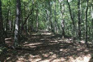 Liberty 29-Acre Recreational Property in Pickens, SC (13 of 18)