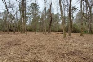 Large Wooded Home-site / Recreational in Walker County, TX (2 of 8)