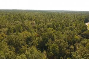 Large Wooded Home-site / Recreational in Walker County, TX (7 of 8)