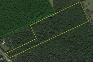 Large Wooded Home-site / Recreational in Walker County, TX (4 of 8)