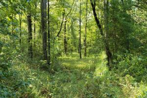 Large Wooded Home-site / Recreational in Walker County, TX (6 of 8)