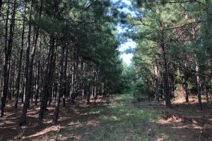 Orangeburg Hwy 400 Timber/Rec/Homesite Estate - Orangeburg County SC