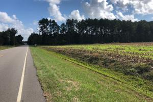 Ridgeville 35 +/- Acres  - Berkeley County SC