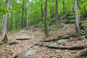 Private Wilderness With Long Range Views in Buncombe, NC (19 of 19)
