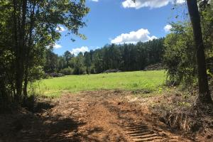 Hughes Creek Hunting & Timber Investment in Pickens, AL (31 of 54)
