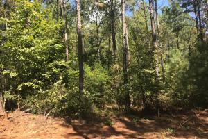 Hughes Creek Hunting & Timber Investment in Pickens, AL (20 of 54)