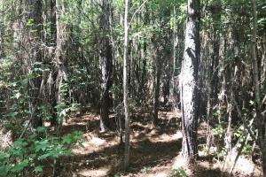 Hughes Creek Hunting & Timber Investment in Pickens, AL (43 of 54)