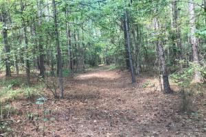 Hughes Creek Hunting & Timber Investment in Pickens, AL (48 of 54)