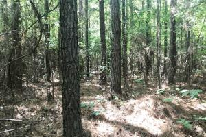 Hughes Creek Hunting & Timber Investment in Pickens, AL (46 of 54)