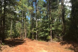 Hughes Creek Hunting & Timber Investment in Pickens, AL (18 of 54)