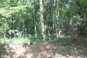 Hughes Creek Hunting & Timber Investment in Pickens, AL (29 of 54)
