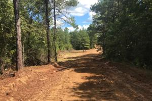 Hughes Creek Hunting & Timber Investment in Pickens, AL (24 of 54)