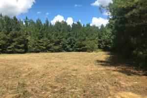 Hughes Creek Hunting & Timber Investment in Pickens, AL (15 of 54)