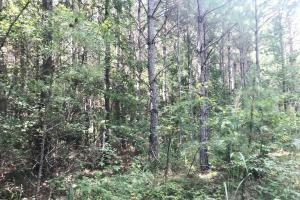 Hughes Creek Hunting & Timber Investment in Pickens, AL (39 of 54)