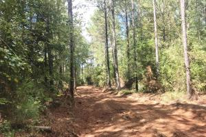 Hughes Creek Hunting & Timber Investment in Pickens, AL (19 of 54)