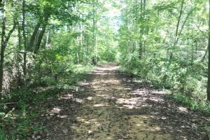 Hughes Creek Hunting & Timber Investment - Pickens County AL