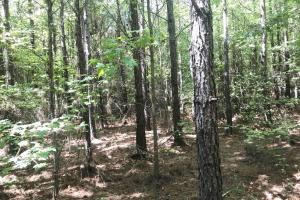 Hughes Creek Hunting & Timber Investment in Pickens, AL (12 of 54)