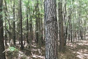 Hughes Creek Hunting & Timber Investment in Pickens, AL (42 of 54)