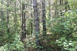 Hughes Creek Hunting & Timber Investment in Pickens, AL (6 of 54)
