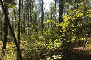Hughes Creek Hunting & Timber Investment in Pickens, AL (54 of 54)