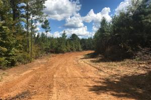 Hughes Creek Hunting & Timber Investment in Pickens, AL (26 of 54)