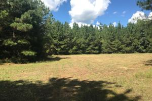 Hughes Creek Hunting & Timber Investment in Pickens, AL (16 of 54)