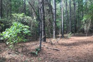 Hughes Creek Hunting & Timber Investment in Pickens, AL (47 of 54)