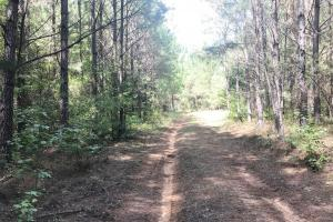 Hughes Creek Hunting & Timber Investment in Pickens, AL (14 of 54)
