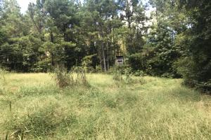 Hughes Creek Hunting & Timber Investment in Pickens, AL (53 of 54)