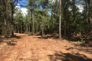 Hughes Creek Hunting & Timber Investment in Pickens, AL (21 of 54)