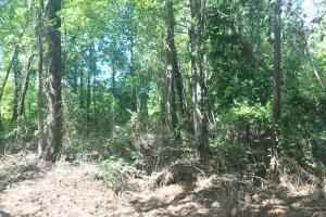 Hughes Creek Hunting & Timber Investment in Pickens, AL (17 of 54)