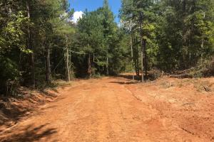 Hughes Creek Hunting & Timber Investment in Pickens, AL (23 of 54)