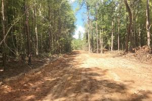 Hughes Creek Hunting & Timber Investment in Pickens, AL (22 of 54)
