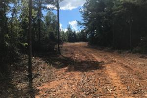 Hughes Creek Hunting & Timber Investment in Pickens, AL (32 of 54)