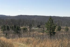 156+/- Acres Deer & Turkey Hunting Property with Cabin - Van Buren County AR