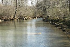 250+/- Acres on South Fork Little Red River in Van Buren, AR (5 of 18)