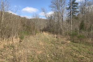 250+/- Acres on South Fork Little Red River in Van Buren, AR (12 of 18)