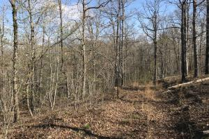 250+/- Acres on South Fork Little Red River in Van Buren, AR (10 of 18)