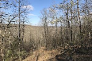 250+/- Acres on South Fork Little Red River in Van Buren, AR (9 of 18)
