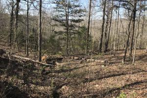 250+/- Acres on South Fork Little Red River in Van Buren, AR (8 of 18)