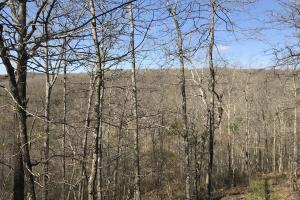 250+/- Acres on South Fork Little Red River in Van Buren, AR (11 of 18)