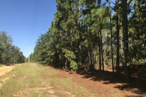Cedar Wren Recreational Homesite - Aiken County SC