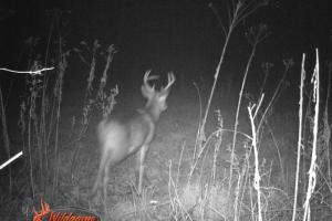 Trail cam catching an 8pt Whitetail on the property. (12 of 16)