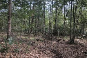 Timber and Recreational Tract near New Orleans - Hancock County MS