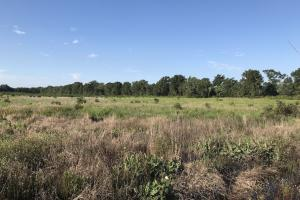 60+/- Acres Hunting Land - Jackson County AR