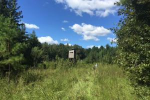 Durant Recreational & Timber Tract in Holmes, MS (13 of 19)
