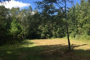 Small Food Plot (3 of 19)