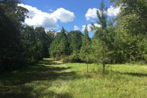 Potential Food Plot (9 of 19)