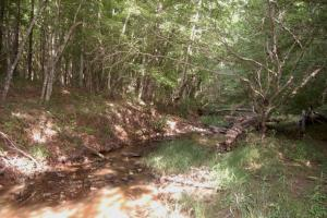 McConnells Timber Tract with Creek in York, SC (15 of 15)